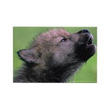 Wolf Cub Rectangle Magnet