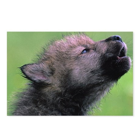 Wolf Cub Postcards (Package of 8)