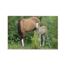 Mare  Foal Rectangle Magnet