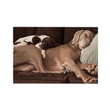 Weimaraner and puppy cuddling Rectangle Magnet
