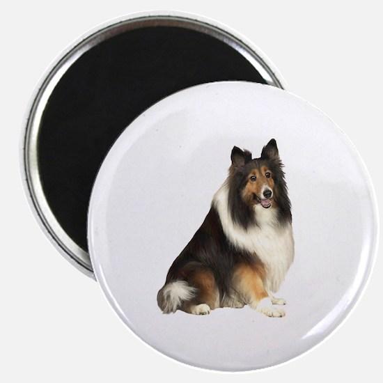 Collie (dark sable) Magnet