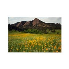 Blooming yellow flower field at C Rectangle Magnet
