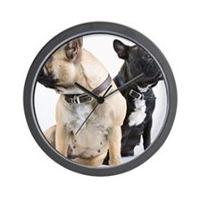 Two French Bulldogs together against wh Wall Clock