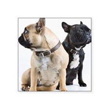 "Two French Bulldogs togethe Square Sticker 3"" x 3"""