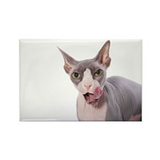 Sphynx Cat with tongue out Rectangle Magnet