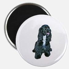Cocker (black- white bib) Magnet