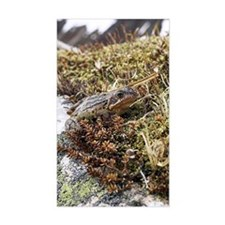 Common frog Decal