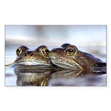Common frogs spawning Decal