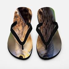 Common kestrel Flip Flops
