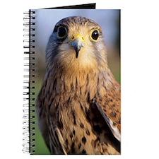Common kestrel Journal