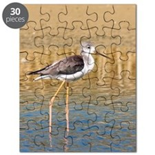 Stilt chick Himantopus, in Donana national  Puzzle