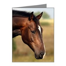 Horse Note Cards (Pk of 20)