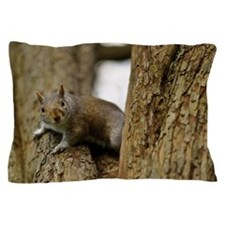 Grey squirrel in tree looking at camer Pillow Case