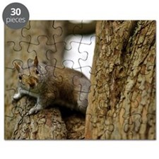 Grey squirrel in tree looking at camera Puzzle