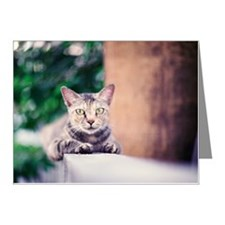 Cat sitting on wall Note Cards (Pk of 20)