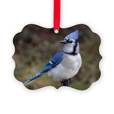 Blue Jay Picture Ornament