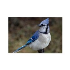 Blue Jay Rectangle Magnet