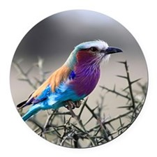 Lilac-Breasted Roller Round Car Magnet