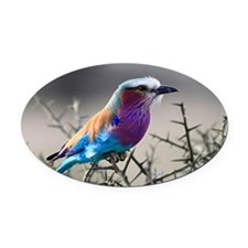 Lilac-Breasted Roller Oval Car Magnet