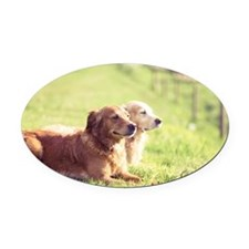 Two golden retrievers Oval Car Magnet