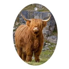 Highland cow Oval Ornament
