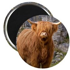 Highland cow Magnet