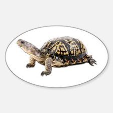 Ornate Box Turtle Oval Decal