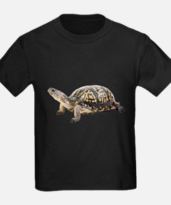 Ornate Box Turtle T