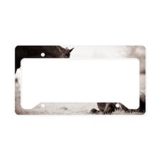 Mare and filly License Plate Holder