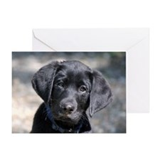 Baby Victor Greeting Card