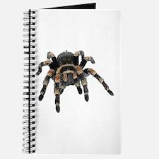 Tarantula Photo Journal