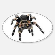 Tarantula Photo Oval Decal