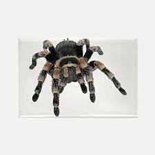 Tarantula Photo Rectangle Magnet