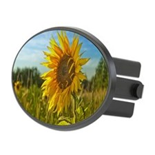 Sunflower in field in sunlight Hitch Cover