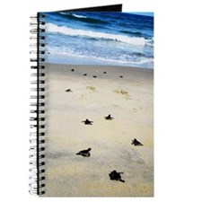 Turtle hatch lings Journal