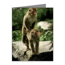 Monkey Note Cards (Pk of 10)