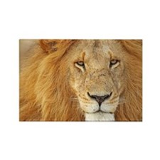 Old male-lion Rectangle Magnet