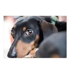 Dachshund Stare Postcards (Package of 8)
