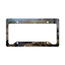 Boxer female dog License Plate Holder