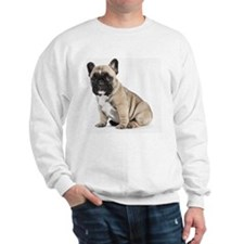 Pedigree French Bulldog Puppy looking t Jumper