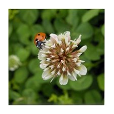 Ladybug on clover flower Tile Coaster