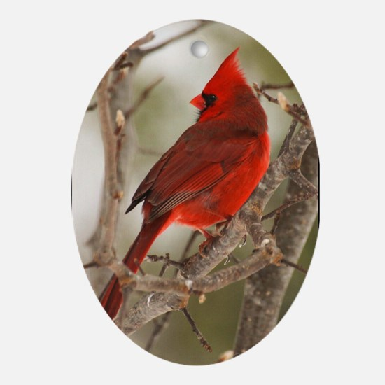 Male Cardinal Ornament 2(Oval)