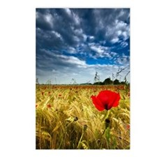 Red poppy in field Postcards (Package of 8)