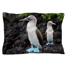 Blue-footed boobies Pillow Case