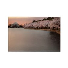 Jefferson memorial and cherry blo Rectangle Magnet