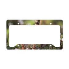 Fungus in grasses License Plate Holder