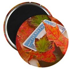 Social security card and autumn leaves, stu Magnet
