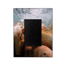Fish in tank Picture Frame