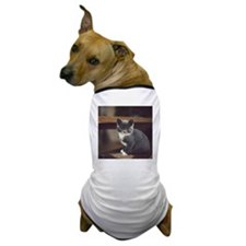 Cute grey kitten sitting on stairs Dog T-Shirt