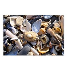 Shells Postcards (Package of 8)